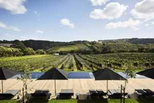 jackelope_winery